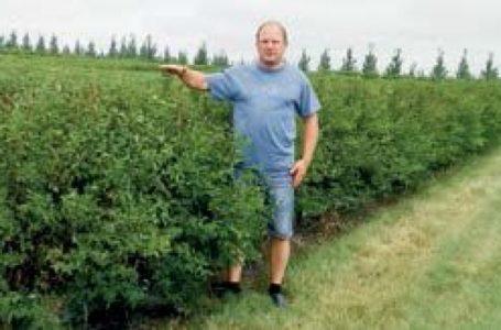 Канадский опыт выращивания жимолости: что взять на заметку украинским производителям ягод?