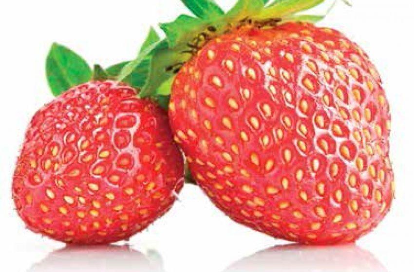 Новое забытое про ягоду: секретами агротехнологии делится агроном Наталия Рекецкая