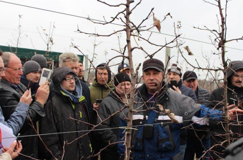 Горіхівництво – перспективний напрям для українських садоводів