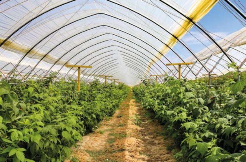 Вирощування малини в тунелях: вимога ринку чи нав'язаний стереотип – доктор Павел Кравец, Польща