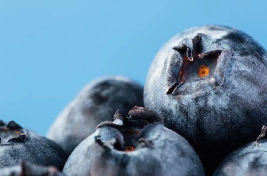 Розсадник «Долина-Агро» презентує в Україні нові сорти лохини