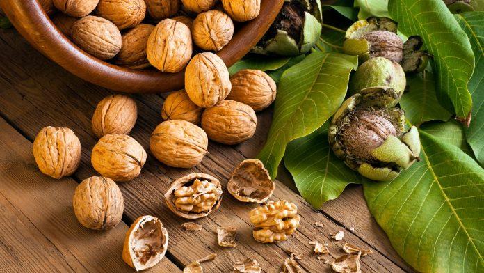 Стартувала реєстрація на Міжнародний горіхововий форум «Від землі – до готового продукту»!